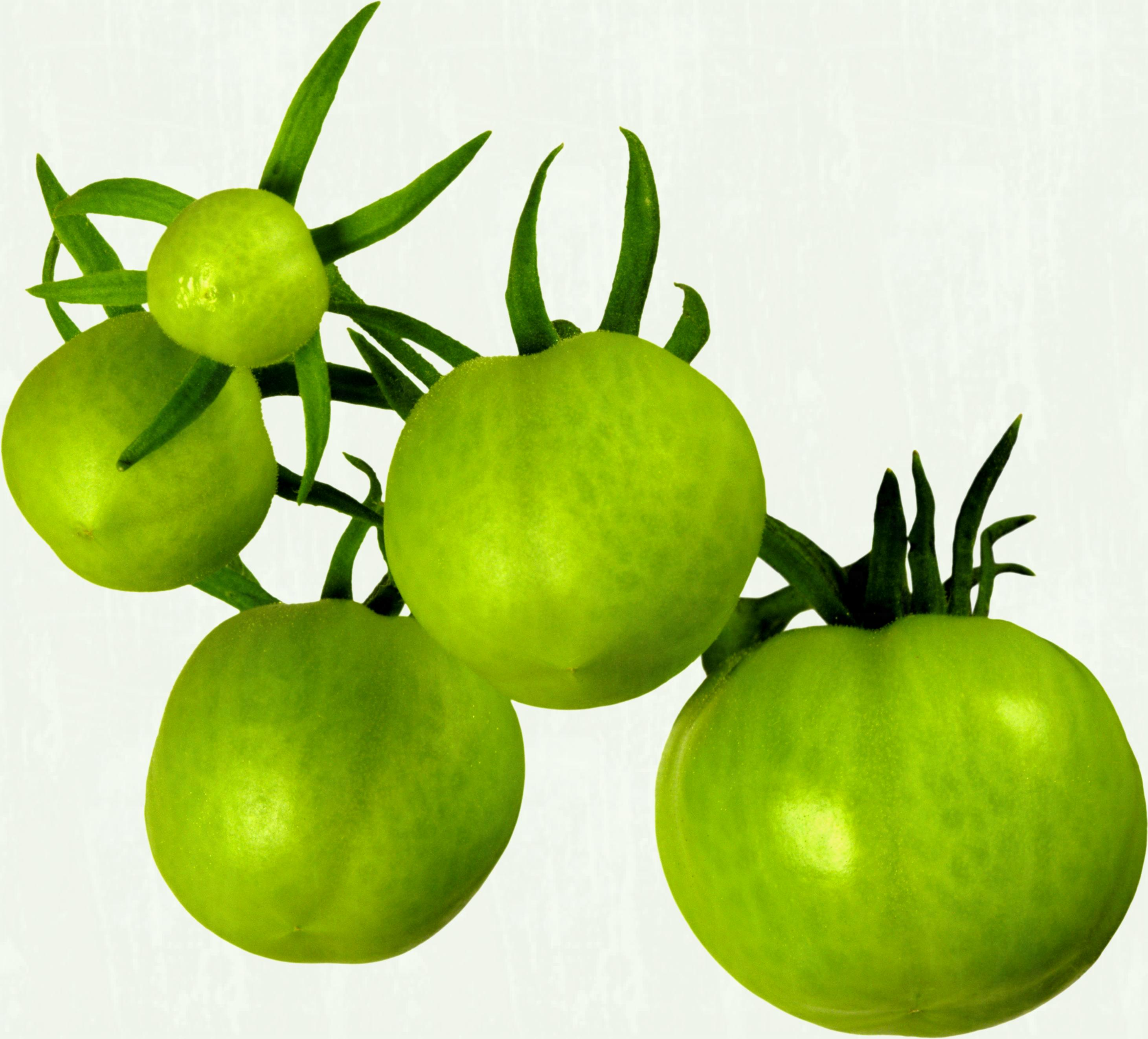 Tomatoes clipart green tomato. Png clipground office tips
