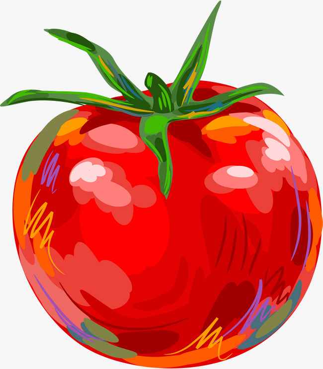 Tomatoes clipart red tomato. Hand painted gules png