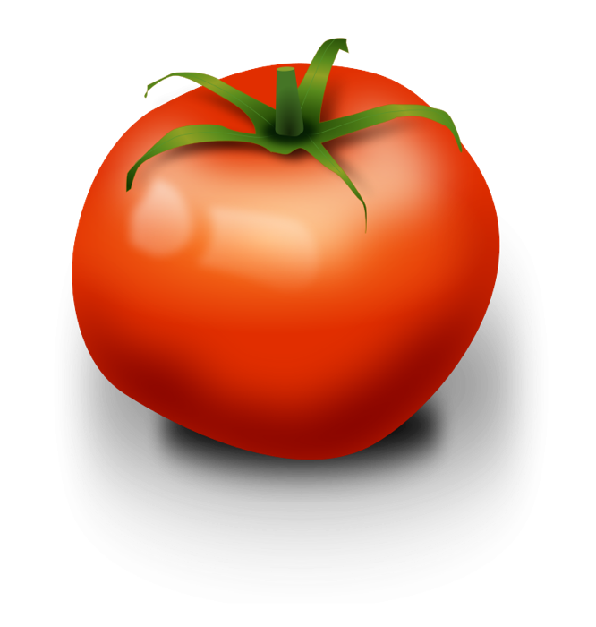 Drawing vegetable realistic. Clipart tomato