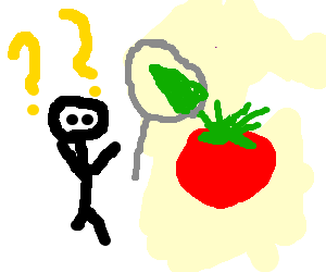Tomatoes drawing. Farmer confused by vineless