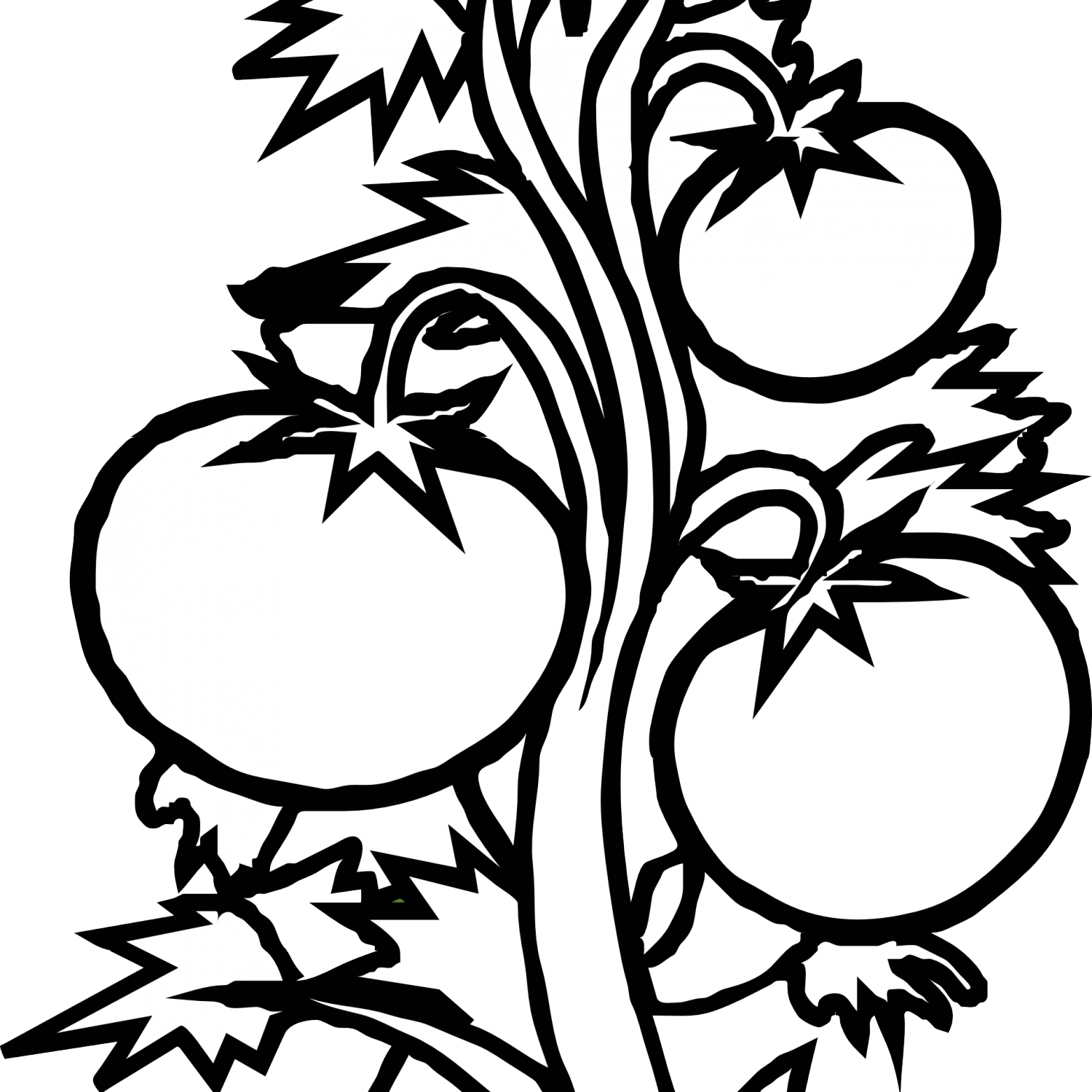 Tomatoes drawing black and white. Clipart huge freebie