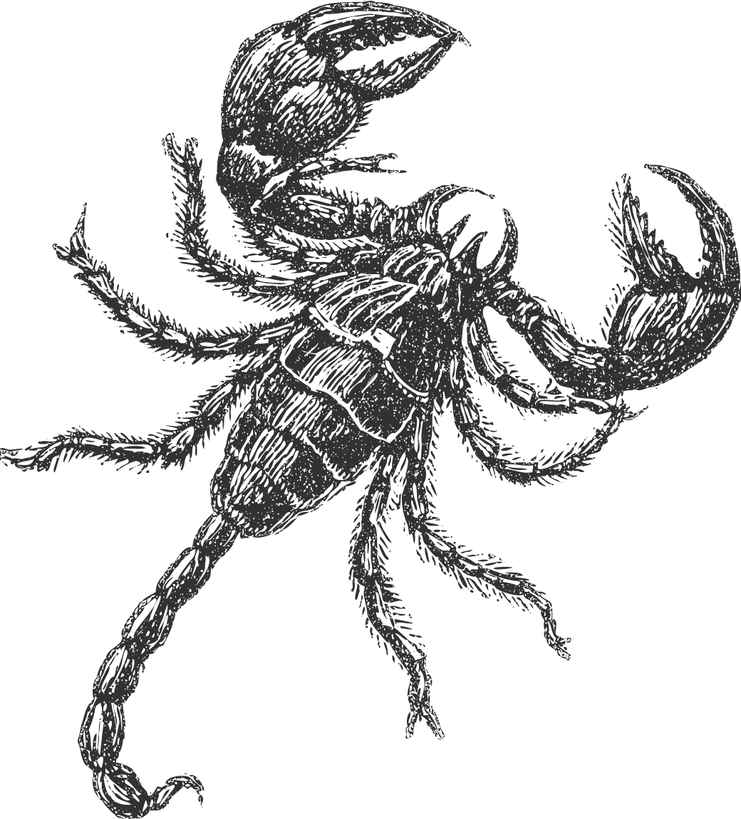 Drawing scorpion insect. The quintessential mind
