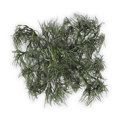 Top of pine png. Index mapping terrain plants
