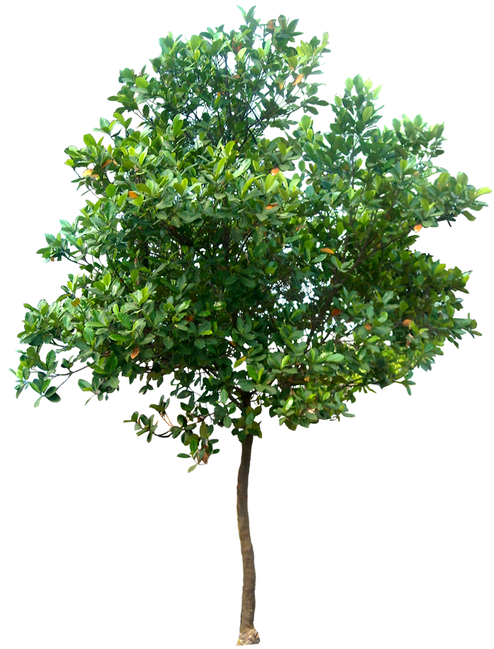 Vector psd tree. Free png images