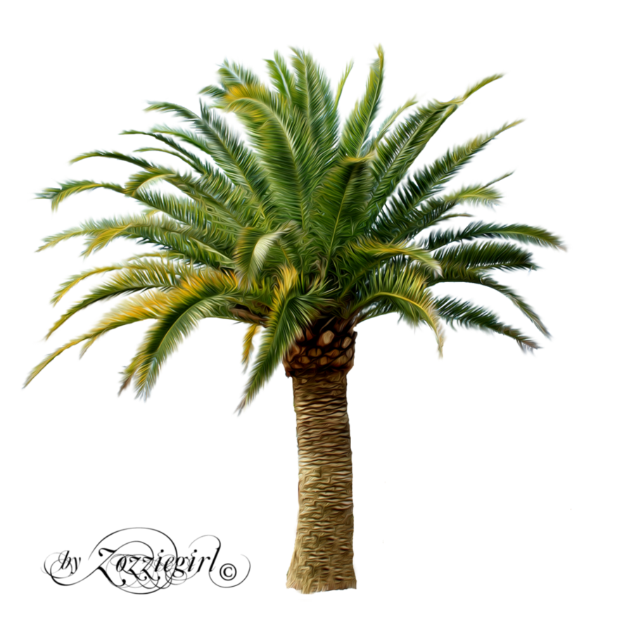 Top view palm trees png. Tree by zozziegirl on