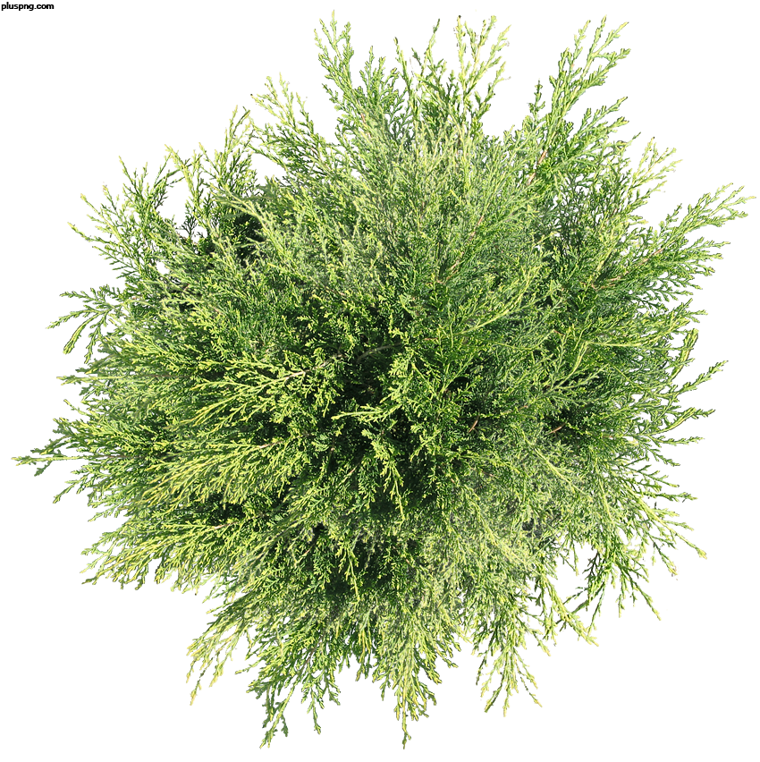 Top view tree png. Transparent images black and