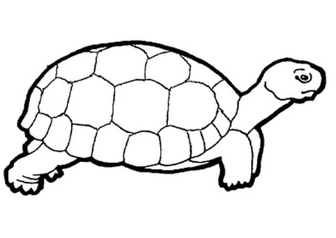 Tortoise clipart coloring. Printable turtle pages for