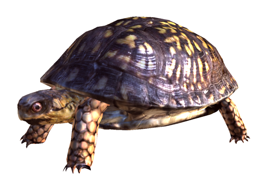 Tortoise vector box turtle. Png free download peoplepng