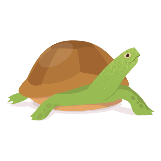 Tortoise vector green. Turtle illustration transparent png