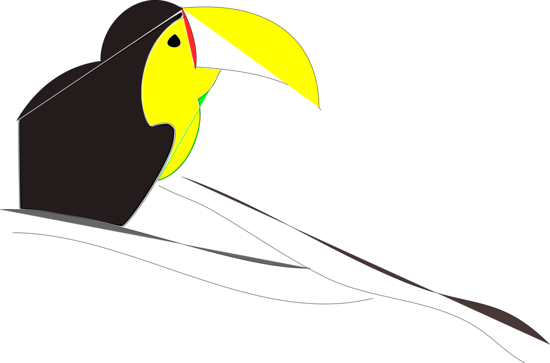 Toucan clipart beak. Neck free commercial colombia