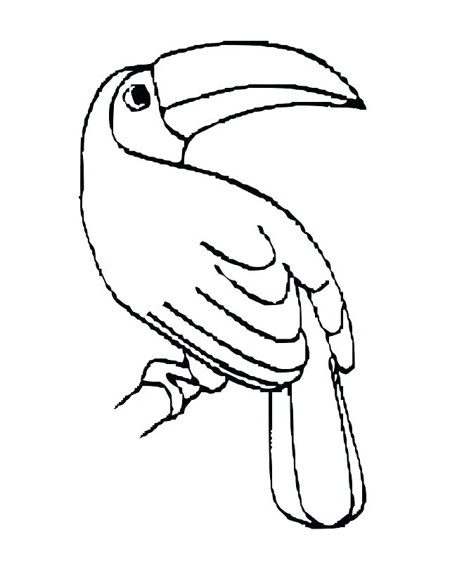 Toucan clipart kid. Coloring pages free on