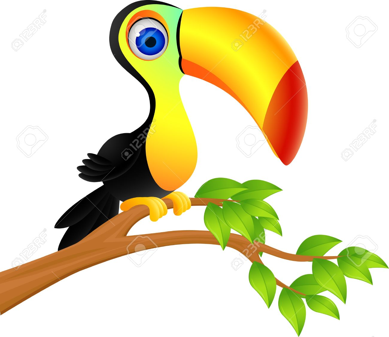 Toucan rainforest monkey