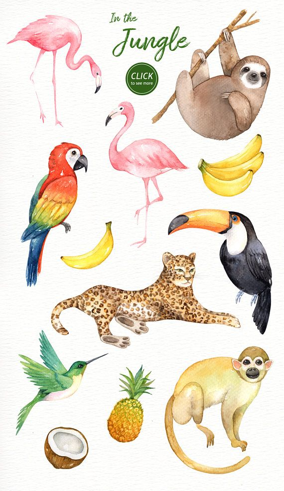 Toucan clipart rainforest monkey. In the jungle watercolor
