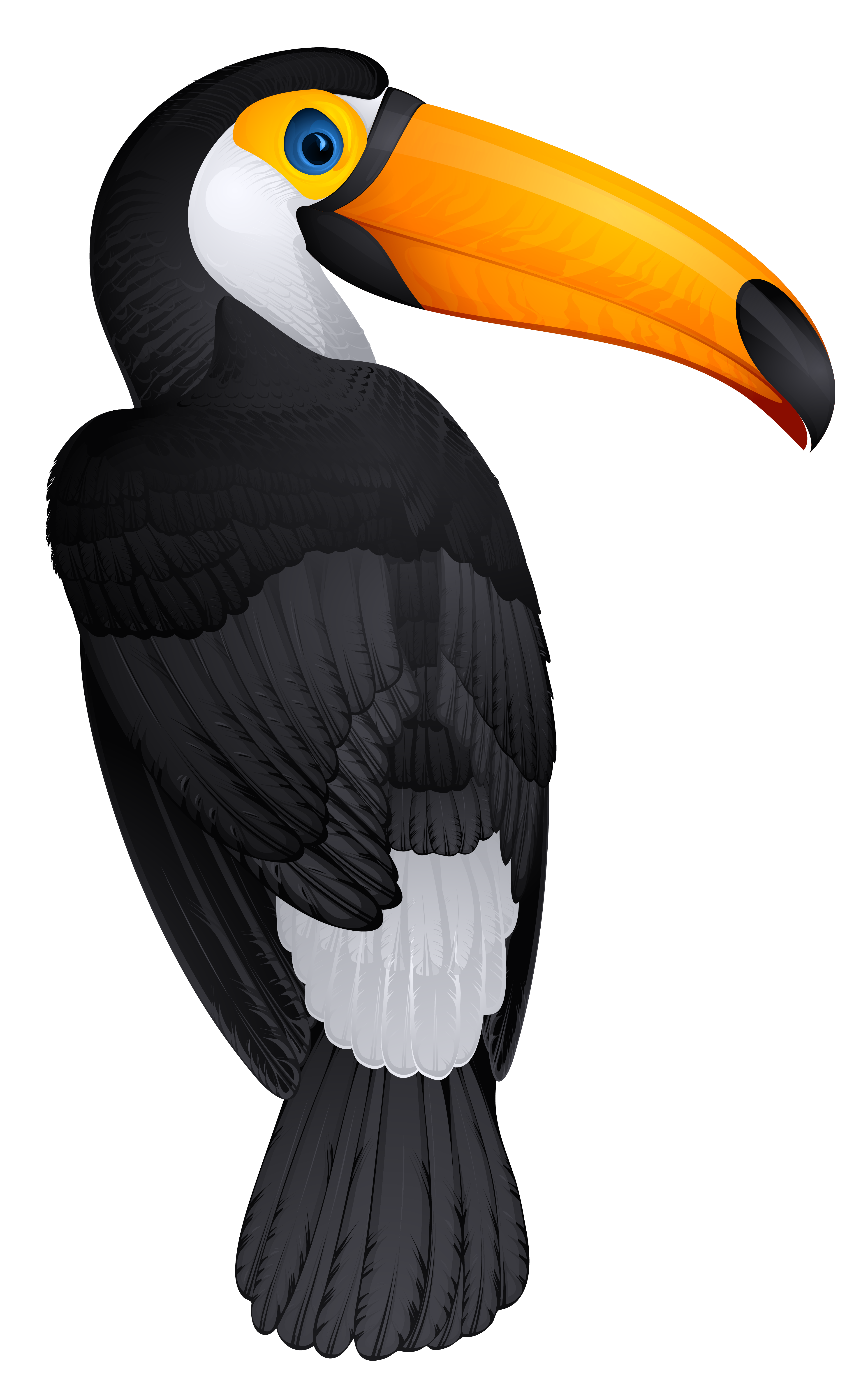 Toucan clipart toucan bird. Png picture gallery yopriceville