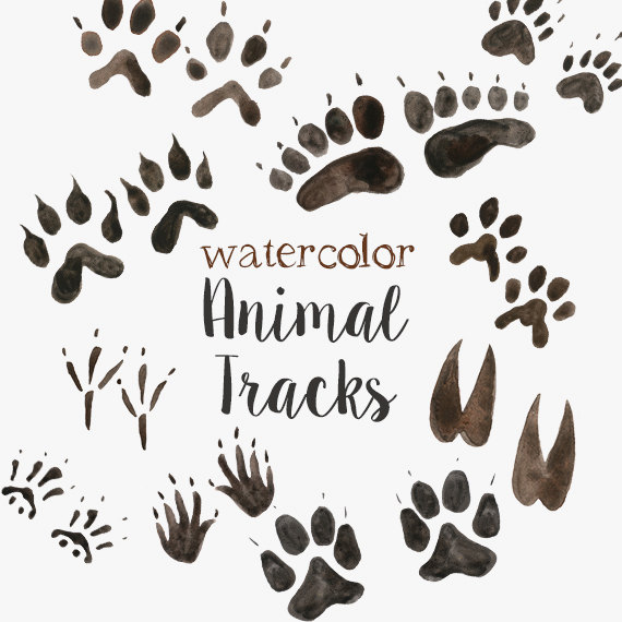Track clipart cat. Watercolor animal tracks dog