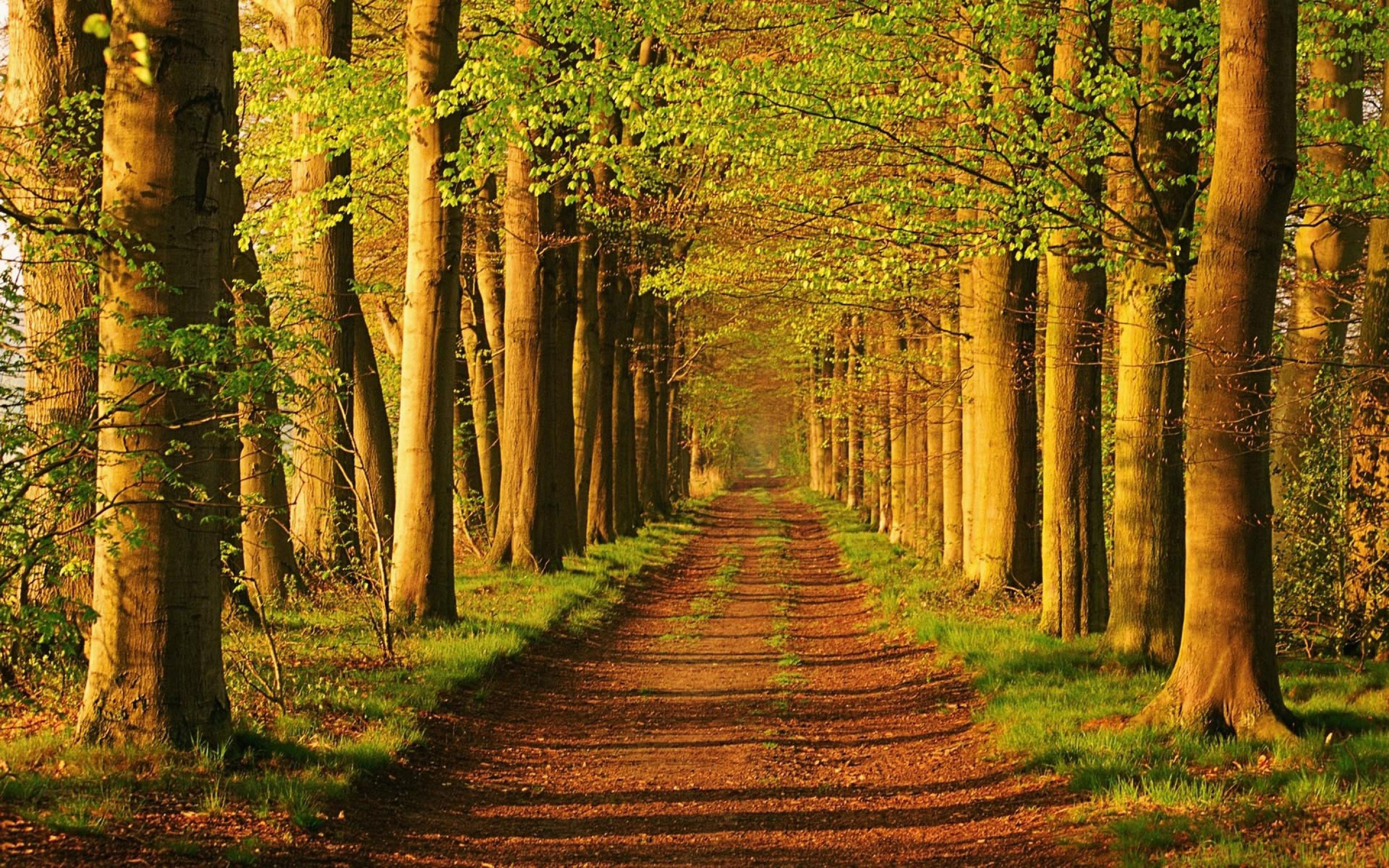 Trail clipart forest trail. Landscape wallpaper gallery yopriceville