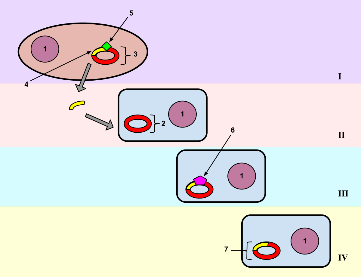 vector pathogen cartoon