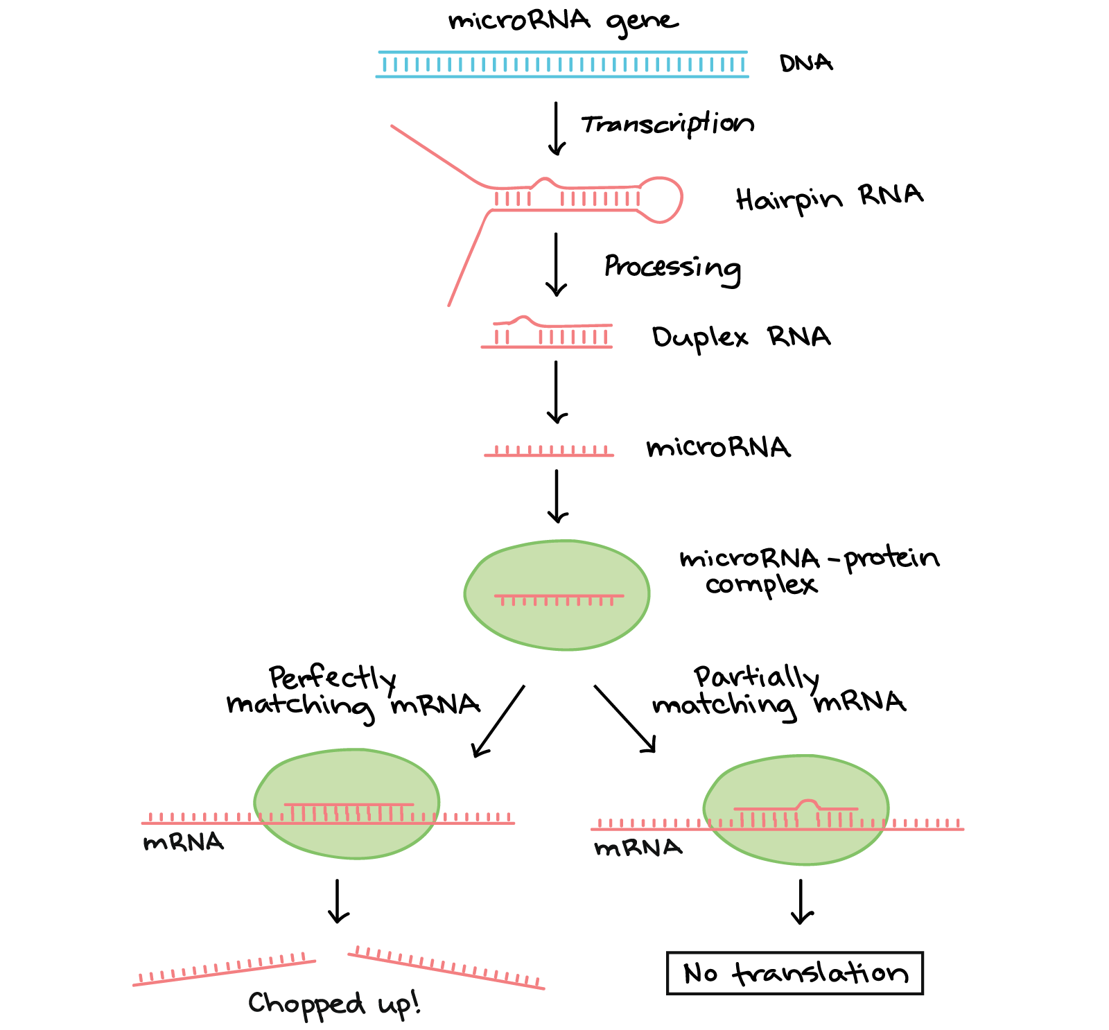 Translate drawing protein modification. Regulation after transcription article