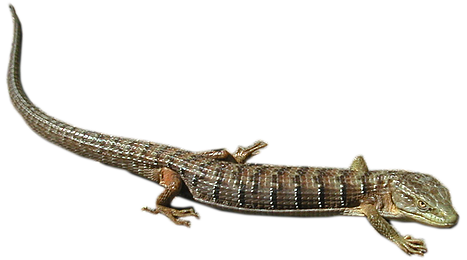 Transparent alligator bronze. Download free png lizard