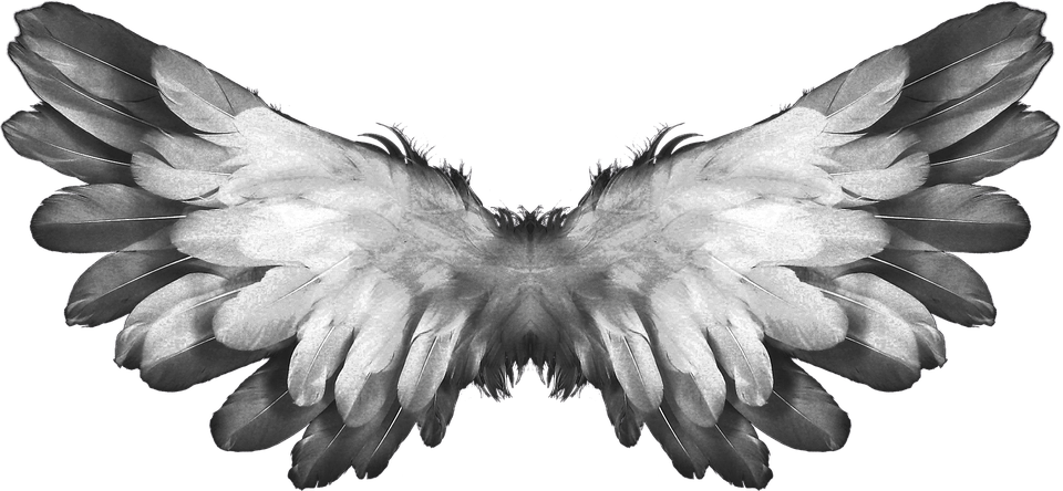 Transparent angel wings png. Feathers stickpng