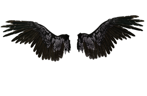 Transparent angel wings png. Uploaded by mackenna on