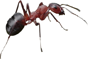 Transparent ant background. Red