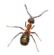 Transparent ant food. How to get rid