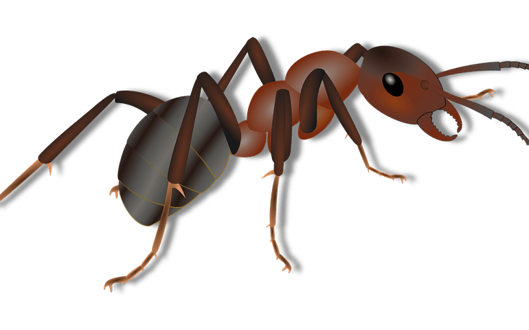 Parasitism drawing dust mite. Indoor ant treatment using