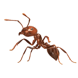 Transparent ant red. Fire ants patrol alliases