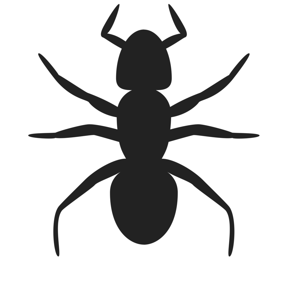 Transparent ant silhouette. Clipart pencil and in