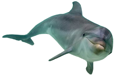Transparent bg dolphin. Download free png image
