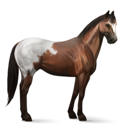 Transparent blanket horse. Appaloosa howrse help and