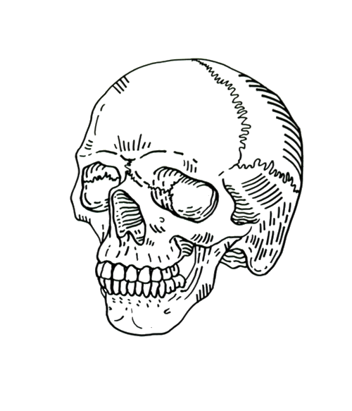 Skulls transparent aesthetic. Images about overlays