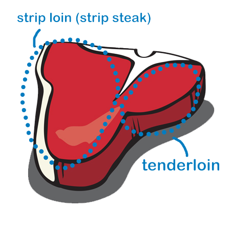 Transparent bone two. Anatomy of a t