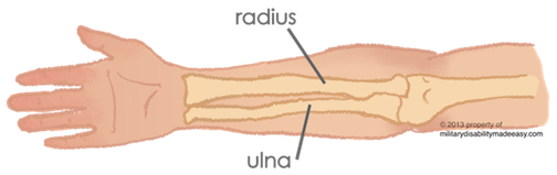 Transparent bone ulna. Index of images elbow