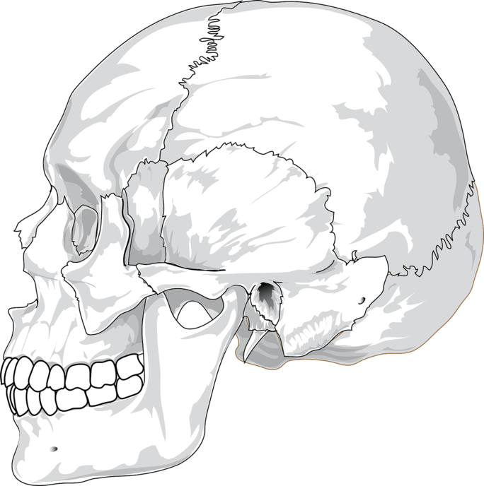 Transparent bones cracked. Reasons your jaw