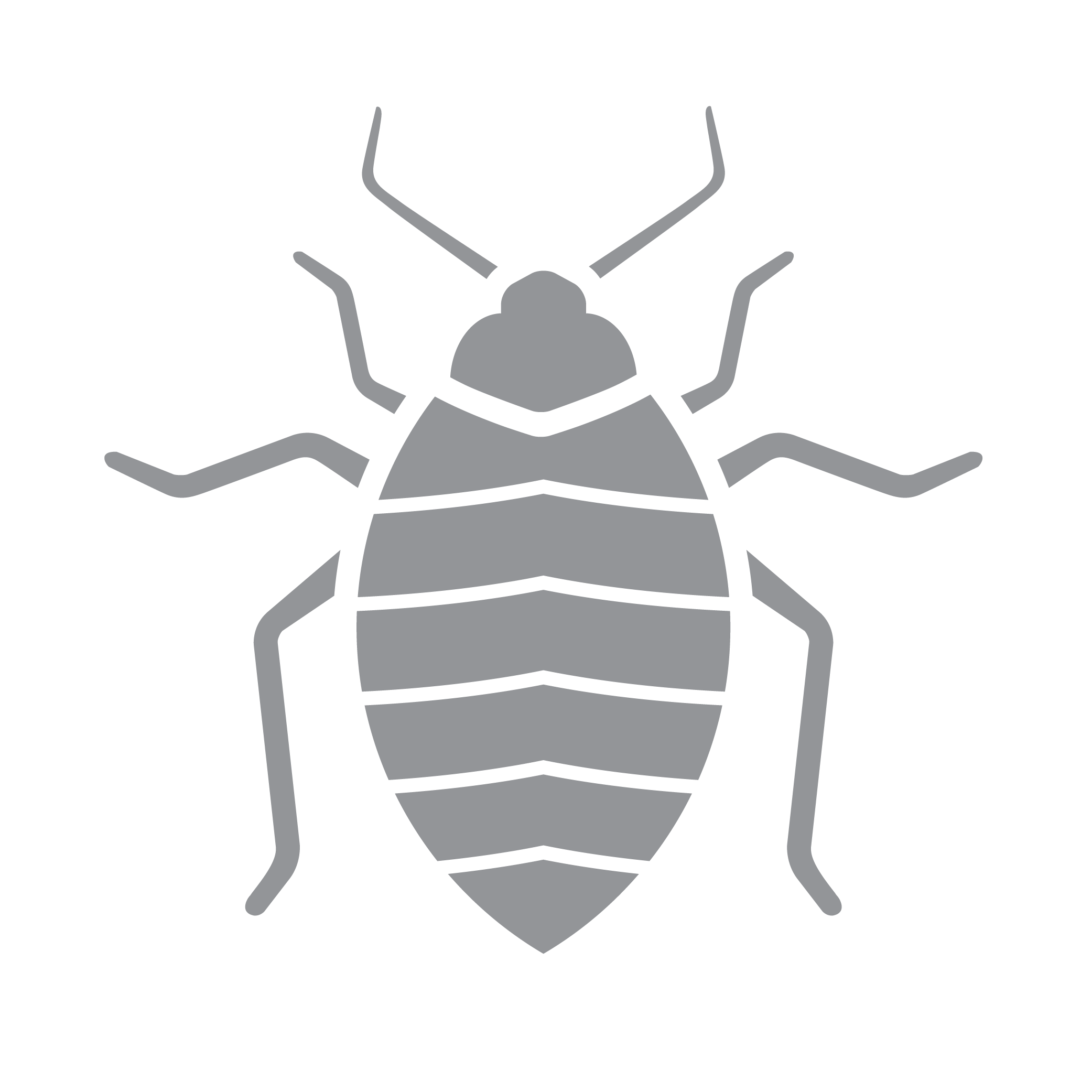 vector insects silverfish