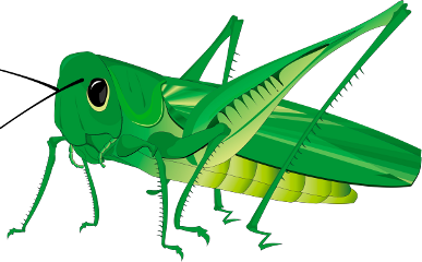 Locust drawing belalang. The newest grasshopper stickers