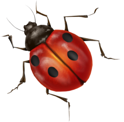 Transparent ladybug background. Insects gallery isolated stock image freeuse library