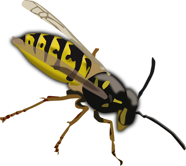 Wasp vector cartoon. Facts for kids cool