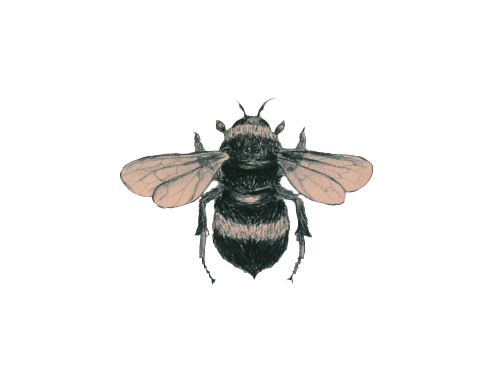 Bees transparent clear background. Banners tumblr transparentsticker blg