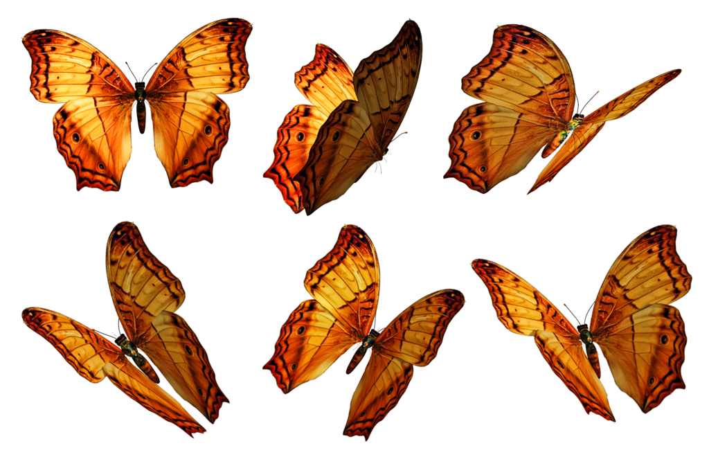 Transparent butterfly png. Butterflies stock by roy