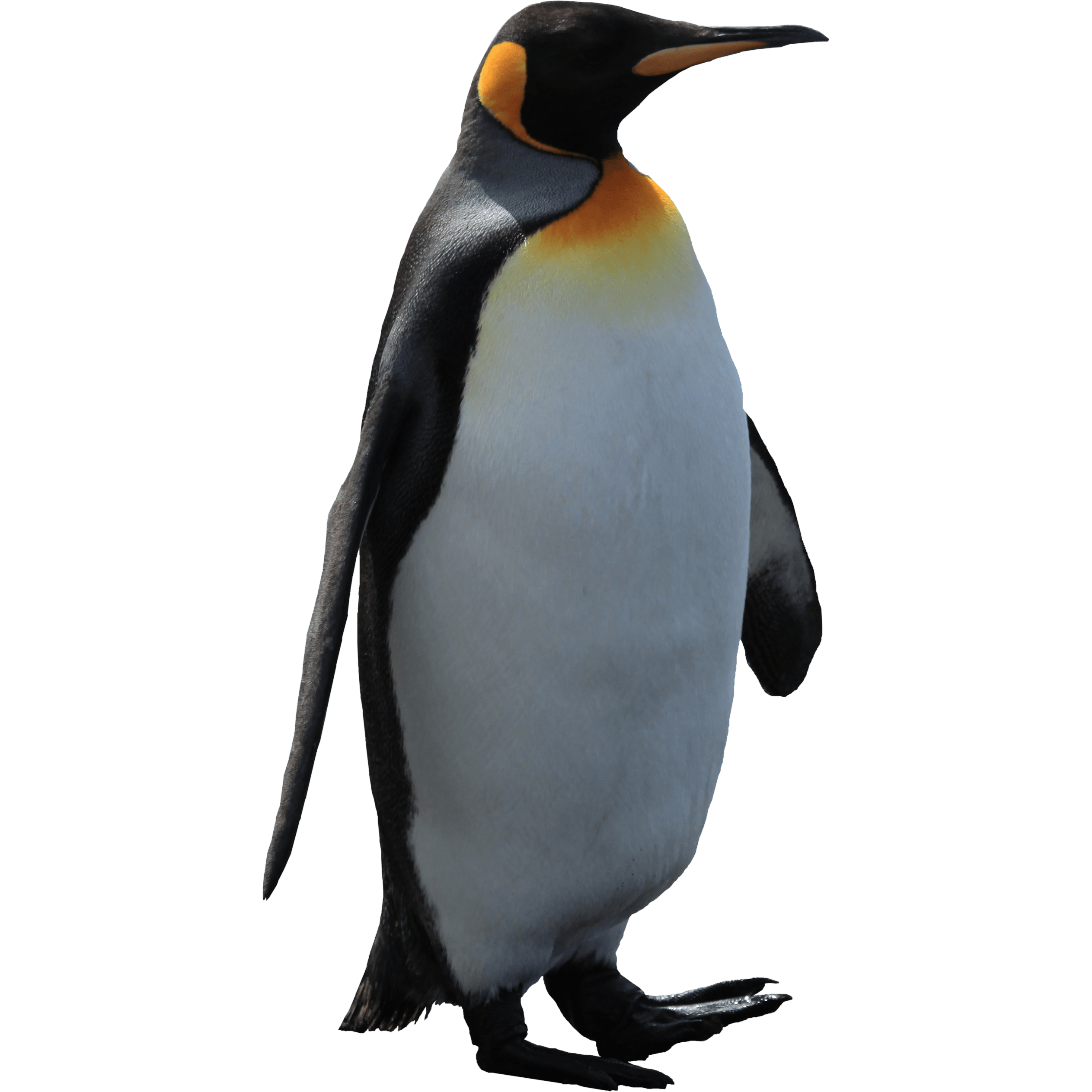 penguin transparent png