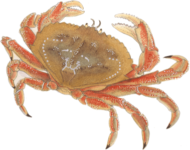 Transparent crab sand. Recommendations from the seafood