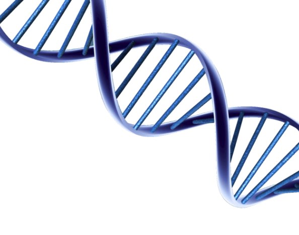 Transparent background mart. Dna png clipart royalty free