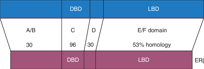 Transparent dna alpha. Structure and percentage of