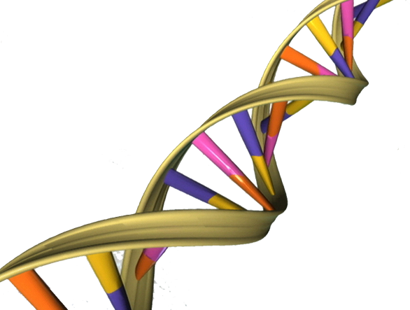 Transparent dna colorful. Scientist launches hunt for