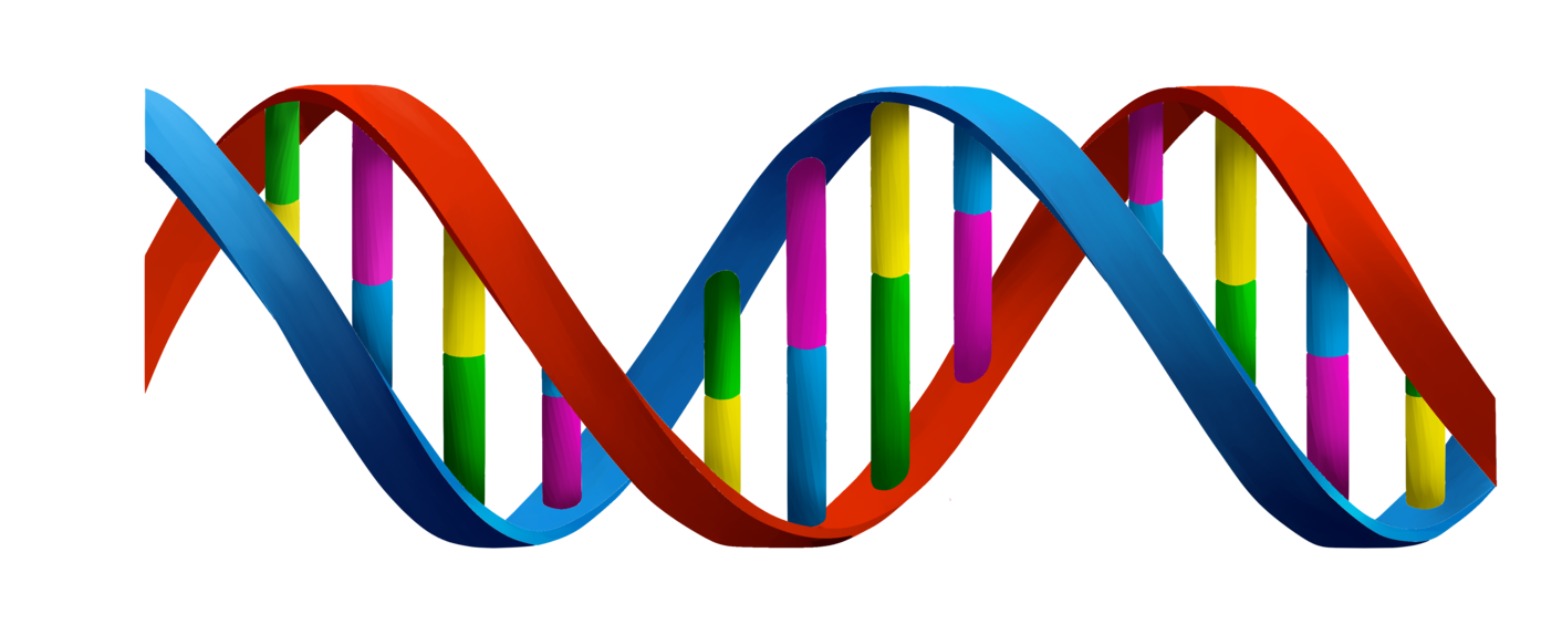 What my test revealed. Transparent dna jpeg clip art black and white library