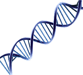 Transparent dna line. Project down through the