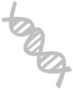 Transparent dna royalty free. Clip art at clker